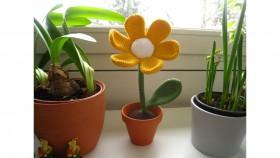 BlumeimTopf