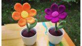 kleine Blume im Topf